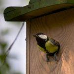Bouwtekening vogelhuisje? Zorg dat je tuin een fijn plekje wordt!