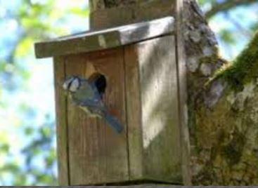 Bouwtekening vogelhuisje
